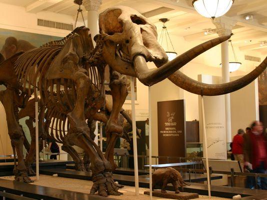 635526216266038375-mastodon-skeleteon